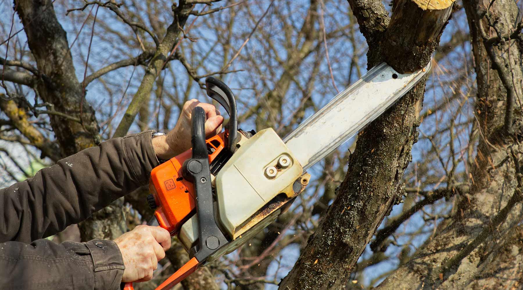 san diego tree trimming
